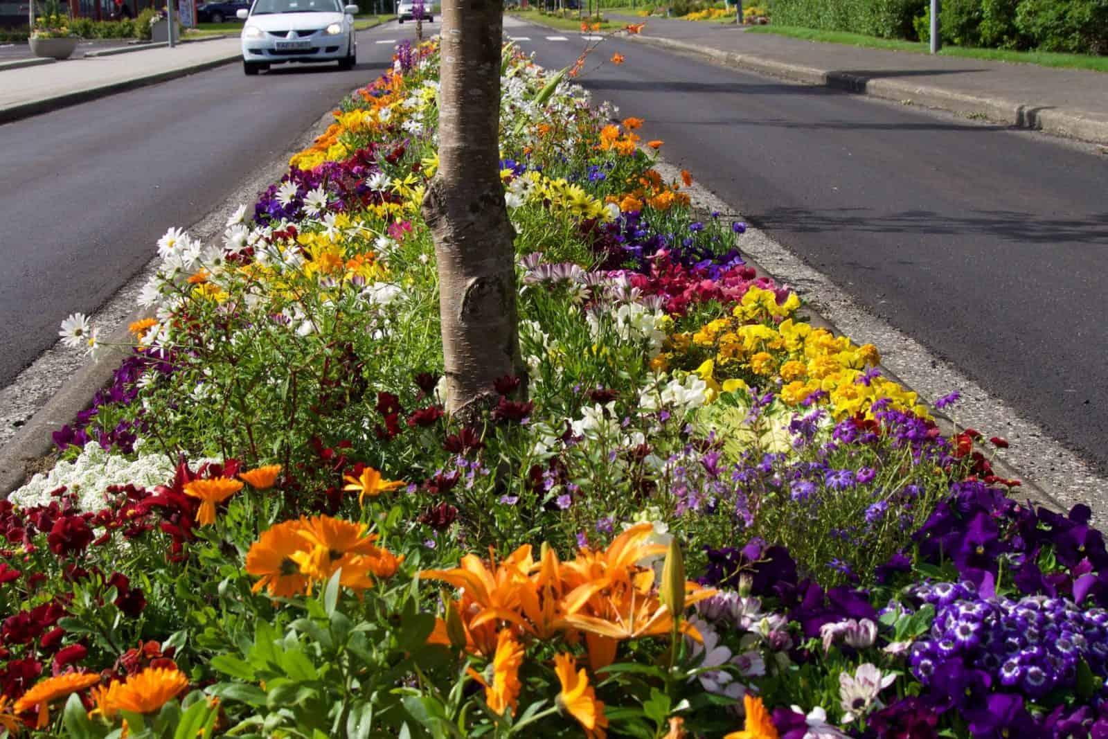 Blumenbeete in Hveragerði